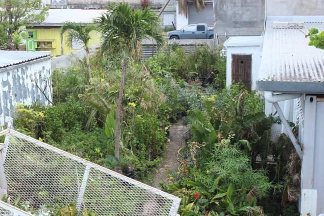 Plantes a tous les prix annonce bricolage jardinage for Tous les plantes