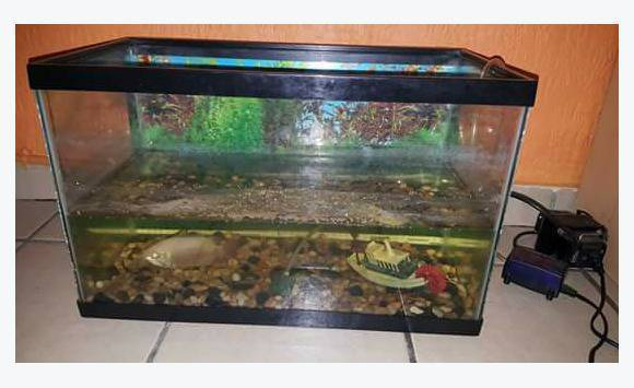 Aquarium classified ad furniture and decoration sint for Aquarium log decoration