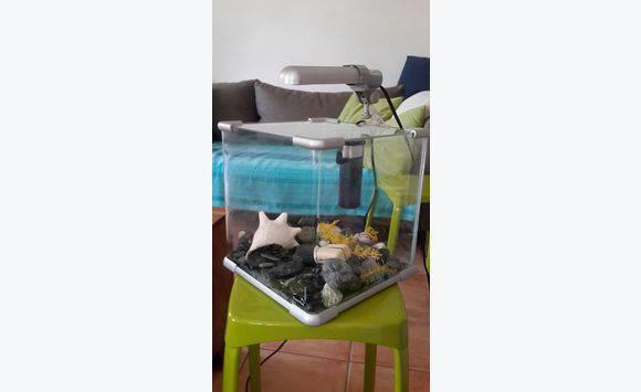Petit aquarium equip annonce meubles et d coration for Aquarium petit prix