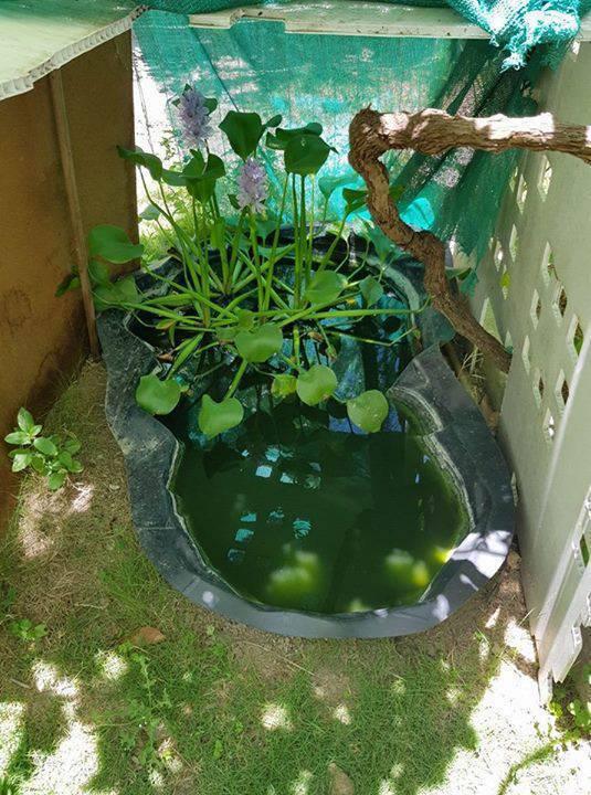 Bassin en plastique annonce bricolage jardinage gustavia saint barth lemy for Bassin en plastique rond