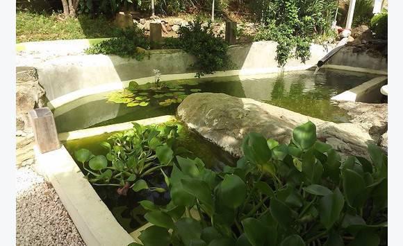 Donne poissons et plantes de bassin annonce bricolage for Donne poisson