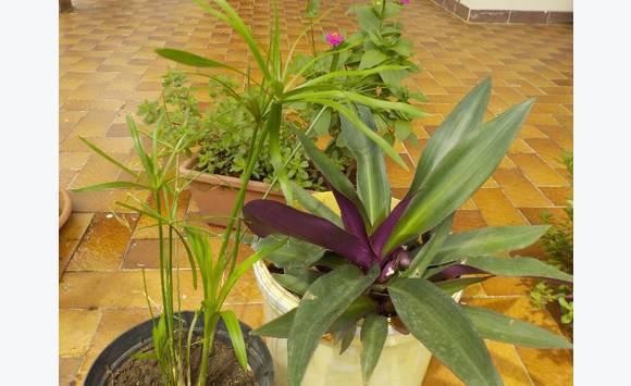 Plantes vertes diverses annonce bricolage jardinage for Recherche sur les plantes vertes