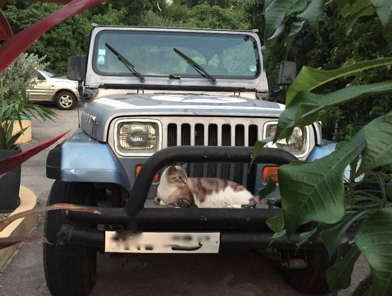 jeep wrangler en l 39 tat annonce voitures saint barth lemy. Black Bedroom Furniture Sets. Home Design Ideas